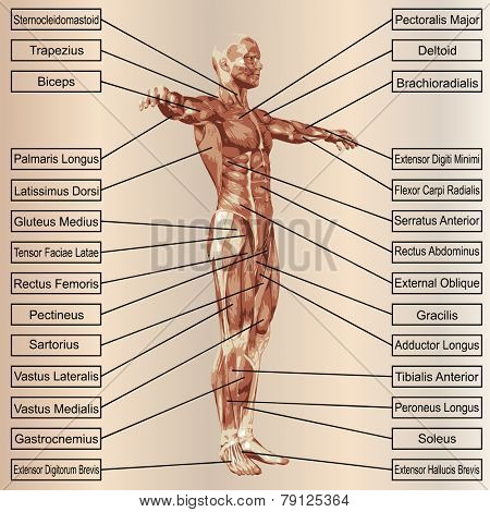 Concept or conceptual 3D male or human anatomy, a man with muscles and text on beige vintage background
