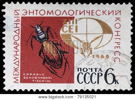 International Entomological Congress