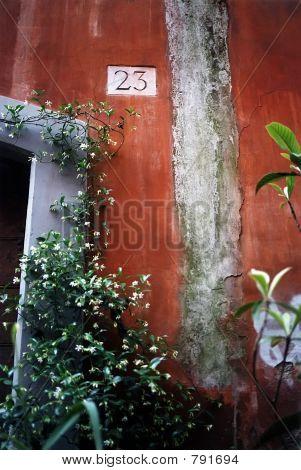 Wall with Jasmine