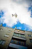 White doves flying on the blue sky in city poster