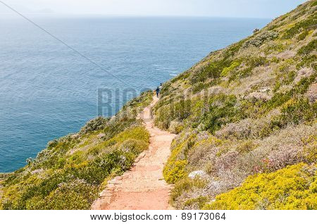 Trail To Viewpoint Above The New Lighthouse At Dias Point