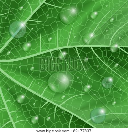 Green Leaf With Waterdrops