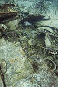 school of fish at the bottom of a ship wreck poster