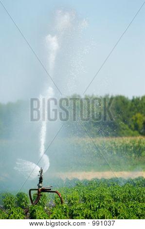 Irrigation Spout In A Field