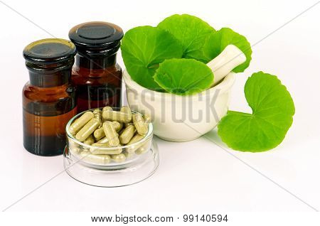 Natural products from Indian Pennywort .