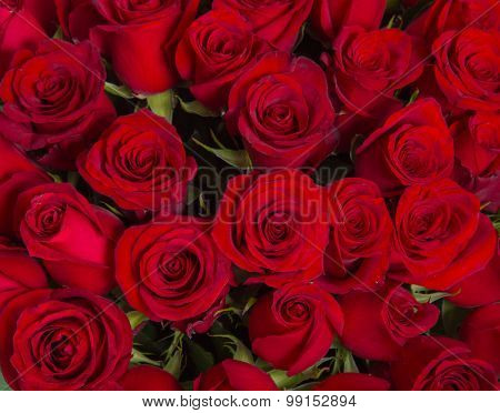Plenty red natural roses background.