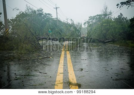 Tree And Debri In Road During Typhoon