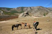 horses in front of turtle rock in mongolia poster