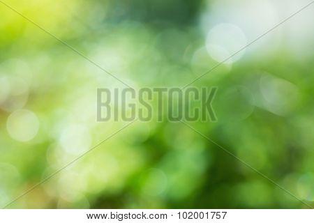 Green Leaves Blurred With Rain