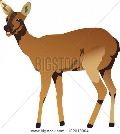 Vectorized illustration of a deer.