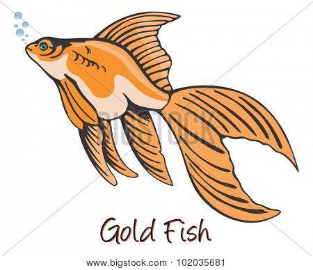 Goldfish, Color Illustration