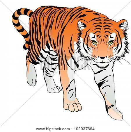 Tiger, Orange, Black and White, vector illustration