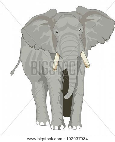 Elephant, Gray, Facing Front, vector illustration