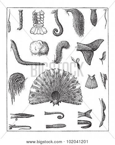 Various Tails, vintage engraved illustration. Dictionary of Words and Things - Larive and Fleury - 1895