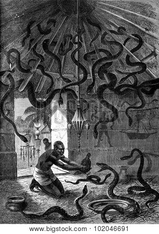 The snake charmer. Okali brought his students a black hen, vintage engraved illustration. Journal des Voyage, Travel Journal, (1880-81).