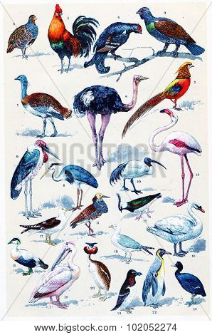 Common birds, vintage engraved illustration. La Vie dans la nature, 1890.