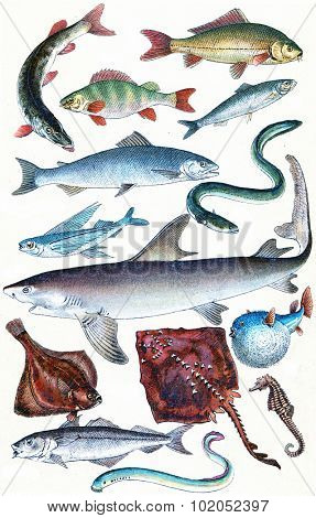 Fish, sharks and ray collection, vintage engraved illustration. La Vie dans la nature, 1890.
