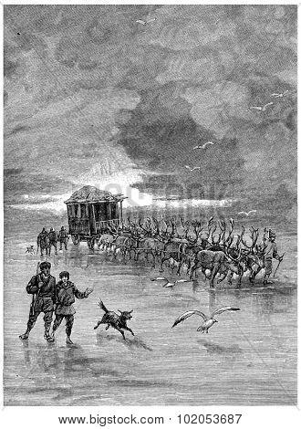 Reindeer were harnessed four by four, vintage engraved illustration. Jules Verne Cesar Cascabel, 1890. poster
