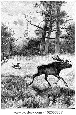 Serge and Jean did not neglect to hunt, vintage engraved illustration. Jules Verne Cesar Cascabel, 1890.