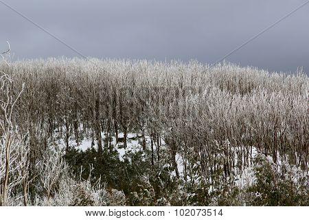Forest on bleak winter day