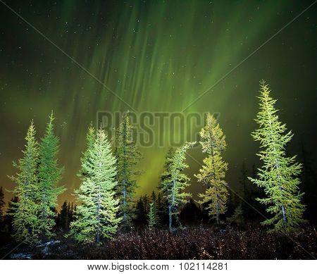 Norther Lights (aurora Borealis)