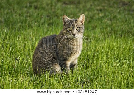 The cat on the green grass.