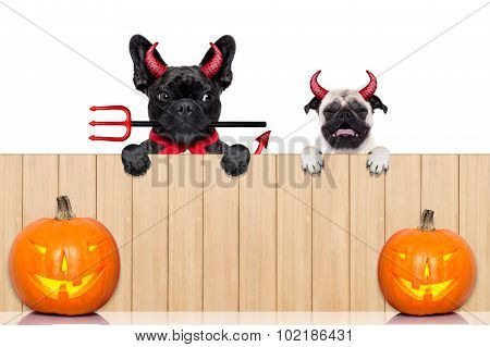 Row Of Halloween Dogs