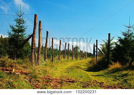 forest path with fences in Krusne hory mountains