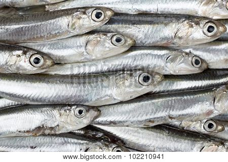Fresh Anchovies Prepared Seafood Background Texture. Raw Food.