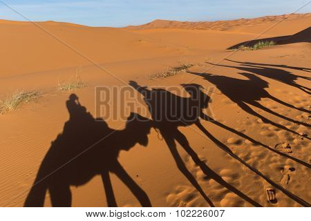 Africa, Morocco - view of Erg Chebbi Dunes - Camel excursion in sahara desert