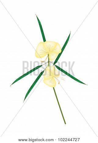 Beautiful Flower Illustration of Yellow Barleria Lupulina Lindl Flower with Green Leaves Isolated on White Background. poster