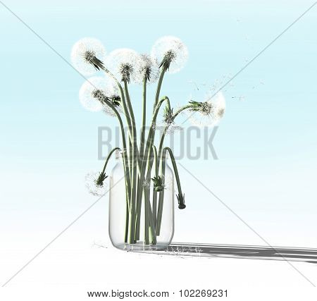 Dandelion In Pot Isolated On Gradiant Background