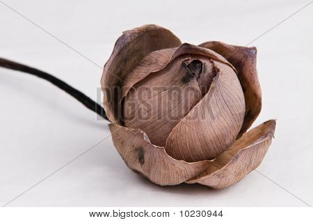 Dried lotus flowers image photo free trial bigstock dried lotus flowers mightylinksfo