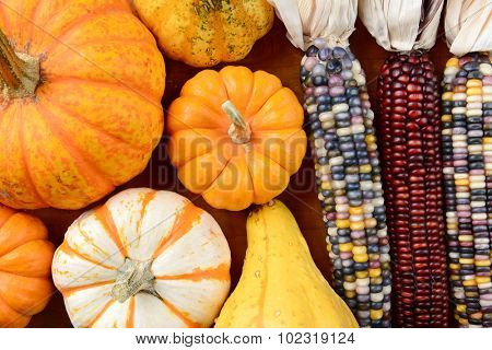 Overhead view of Gourds and Indian Corn filling the frame. Assorted decorative pumpkins, gourds and colorful flint corn, in horizontal format.
