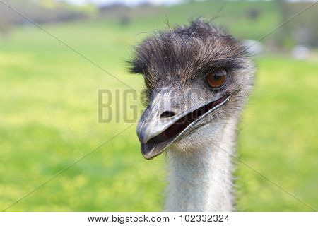 Happy Emu