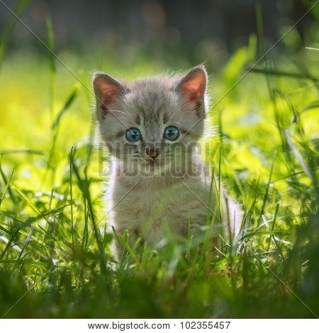 kitten on grass close up