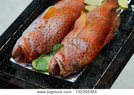 Grouper fish on grill