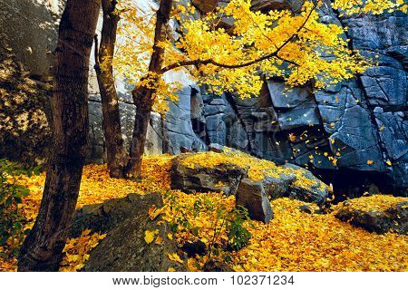 Autumn Trees And Rocks