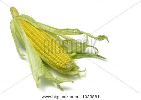 Corn Cob 2