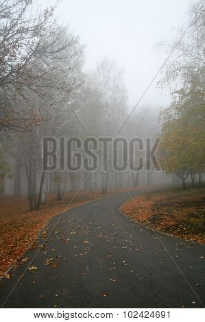Stock photo of a Fog in a park