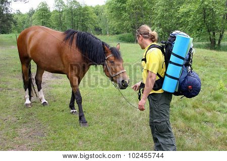 Young Tourist With A Backpack Acquainted With The Horse And The Horse Gives A Flower