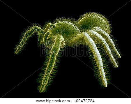 SEM style illustration of a spider