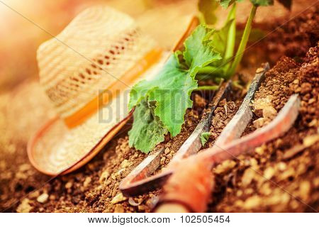 Farmer tools in the garden, pitchfork and straw hat lying down on the ground near fresh green plants, agriculture works, autumn harvest season concept