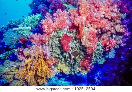 Coral Reef Fiji South Pacific