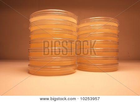 Laboratory plates of agar