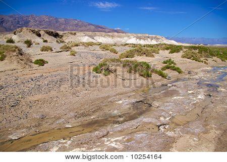 Salt Creek with pupfish, Death Valley