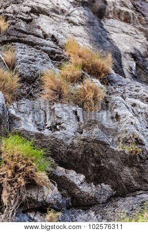 Rockface With Bushes