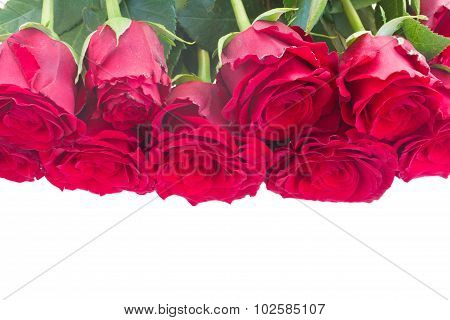 Border of red roses