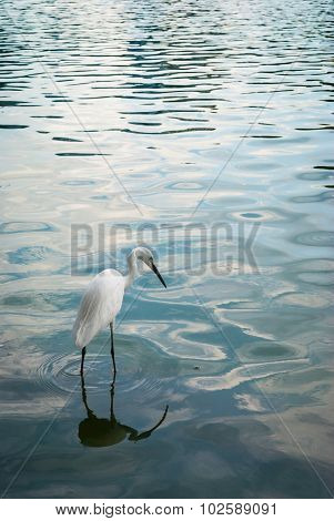 An egret in the park is standing in wavy pond