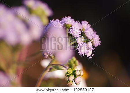 a purple flower in the dark background